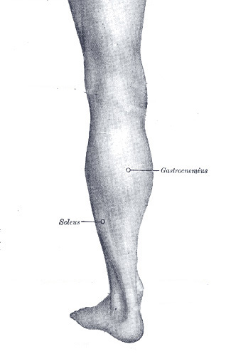 The Gastrocnemius and Soleus muscles - two common places for trigger points